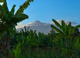 banana-trees-under-clear-sky