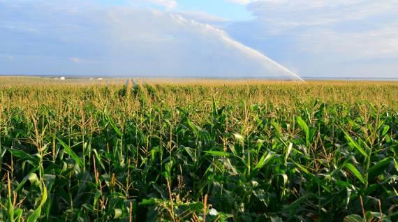 Perfect Agricultural Farmland