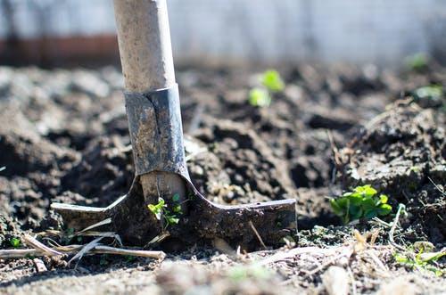 Natural Fertilizers for Enhanced Harvest